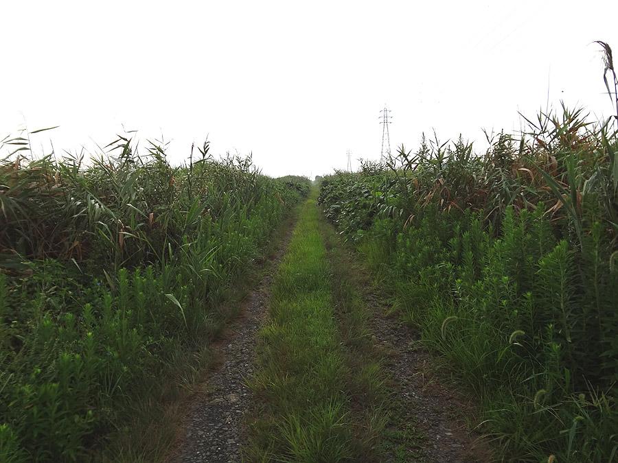 散歩道の草刈り_d0151813_8592040.jpg
