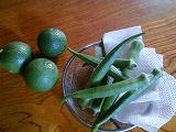 我が農園の今、残暑厳しき折・・・・_c0060919_1727979.jpg