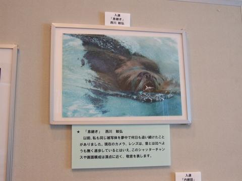 第19回 アマチュア動物写真コンクール 入選 「息継ぎ」_a0288226_052143.jpg