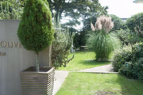 庭のパンパスグラス_b0239244_1137849.jpg