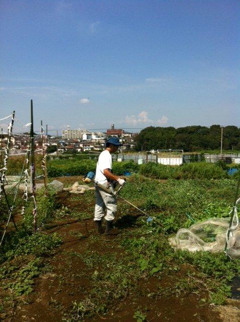 ブロッコリー&芽キャベツの苗計18株水不足と土の温度が高すぎてOUT_c0222448_14262594.jpg