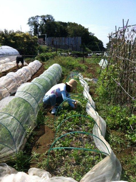 ブロッコリー&芽キャベツの苗計18株水不足と土の温度が高すぎてOUT_c0222448_1426959.jpg