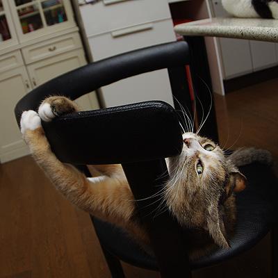椅子と戯れる。_a0028451_124726100.jpg