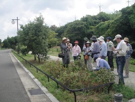 定例植物観察 in せんなん里海公園_c0108460_17154776.jpg