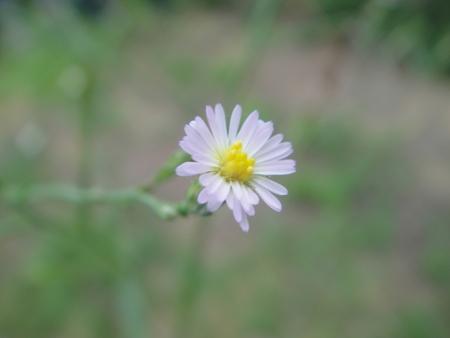 定例植物観察 in せんなん里海公園_c0108460_17225630.jpg