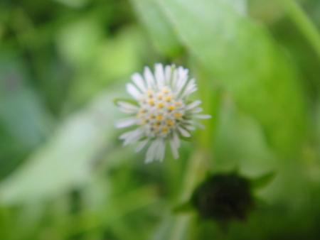 定例植物観察 in せんなん里海公園_c0108460_1782896.jpg