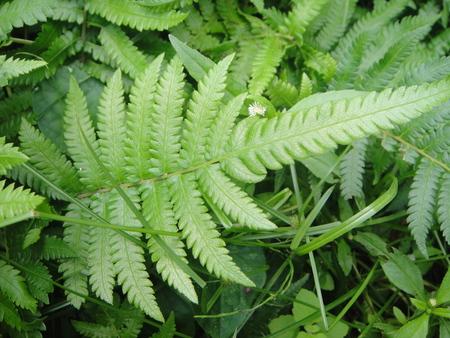 定例植物観察 in せんなん里海公園_c0108460_1792029.jpg