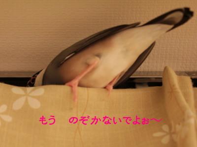 b0158061_2047059.jpg
