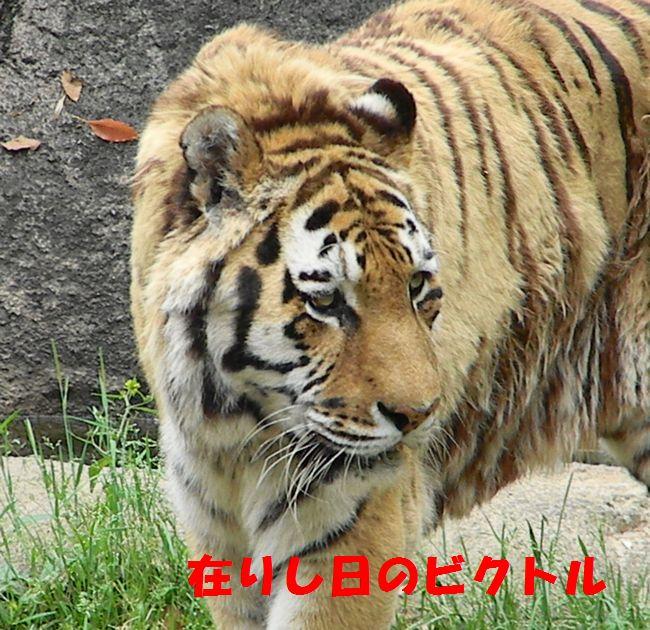 b0014576_3523636.jpg
