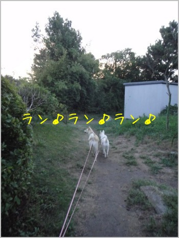 f0164479_22201291.jpg