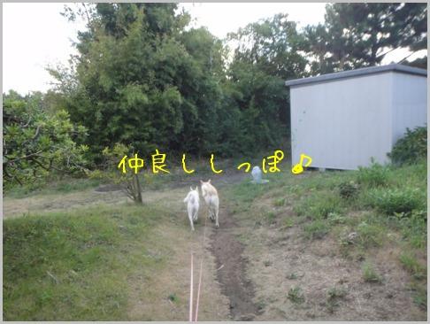 f0164479_22203763.jpg