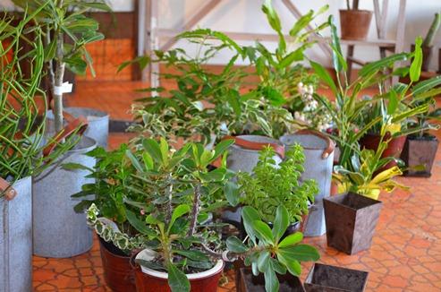 植物 新入り_d0263815_16242864.jpg