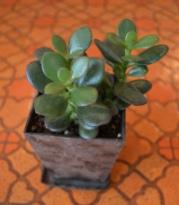 植物 新入り_d0263815_1644764.jpg