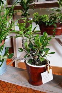 植物 新入り_d0263815_16464335.jpg
