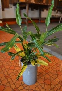 植物 新入り_d0263815_16482151.jpg