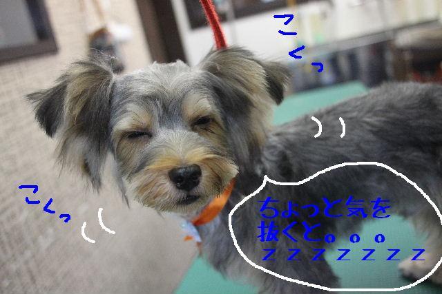 こんばんわぁ~~!!_b0130018_19191268.jpg