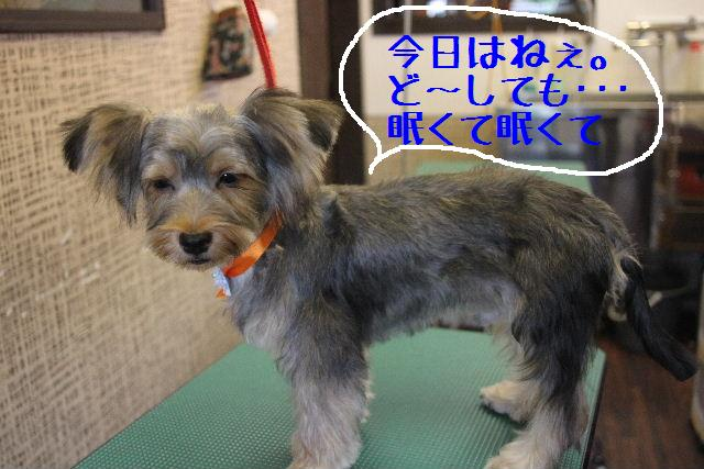 こんばんわぁ~~!!_b0130018_1919774.jpg