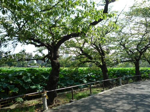上野で芸術の秋?!_b0211926_19363746.jpg
