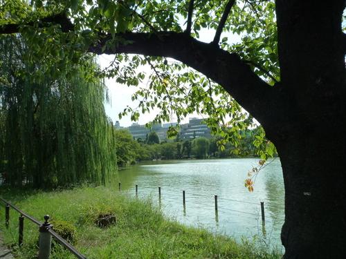 上野で芸術の秋?!_b0211926_19485993.jpg