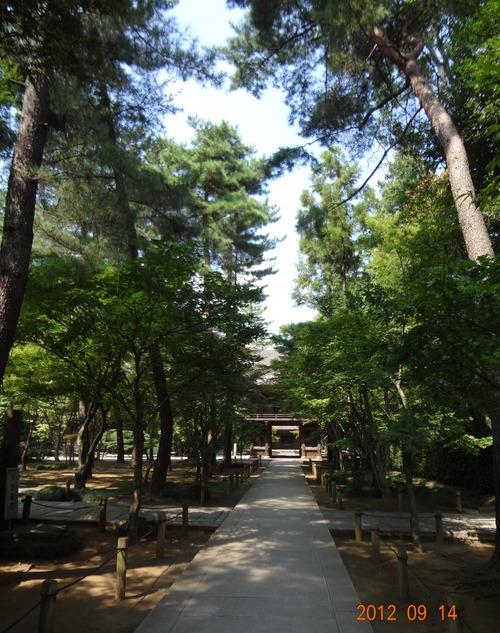 厳しい残暑が続く(哲学堂、平林寺、武蔵野公園、カブトムシ、毒蛇、ヤマカガシ)_e0223735_14335567.jpg