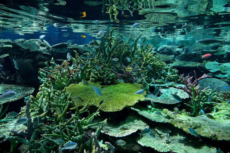 名古屋港水族館_e0170058_1853509.jpg
