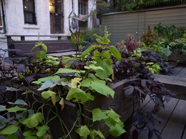 2012 SEPTEMBER NEW YORK #6_f0111683_20371648.jpg
