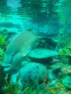 やっぱり水族館が好き。_b0141685_1410154.jpg
