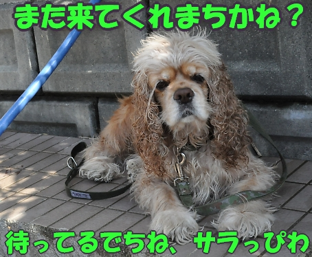 b0067012_23312284.jpg