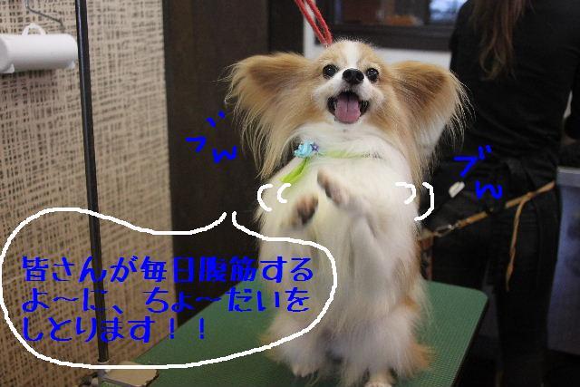 b0130018_22104716.jpg