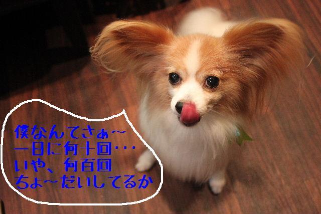 b0130018_22105313.jpg