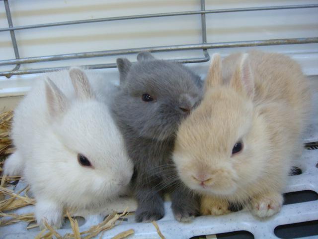20120915 ウサギ・インコ・モルモット・ハムスター_f0189122_1458435.jpg