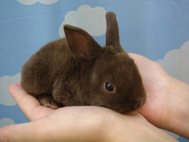 20120915 ウサギ・インコ・モルモット・ハムスター_f0189122_1504918.jpg