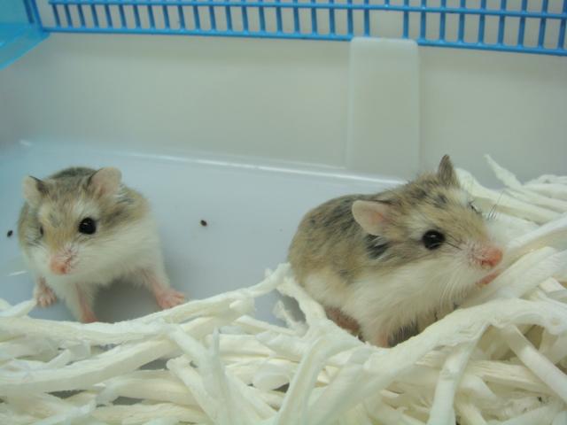 20120915 ウサギ・インコ・モルモット・ハムスター_f0189122_1511113.jpg
