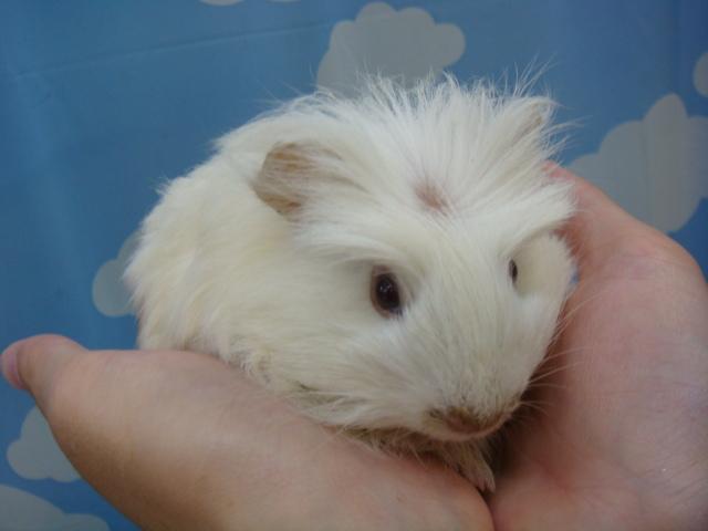 20120915 ウサギ・インコ・モルモット・ハムスター_f0189122_159023.jpg