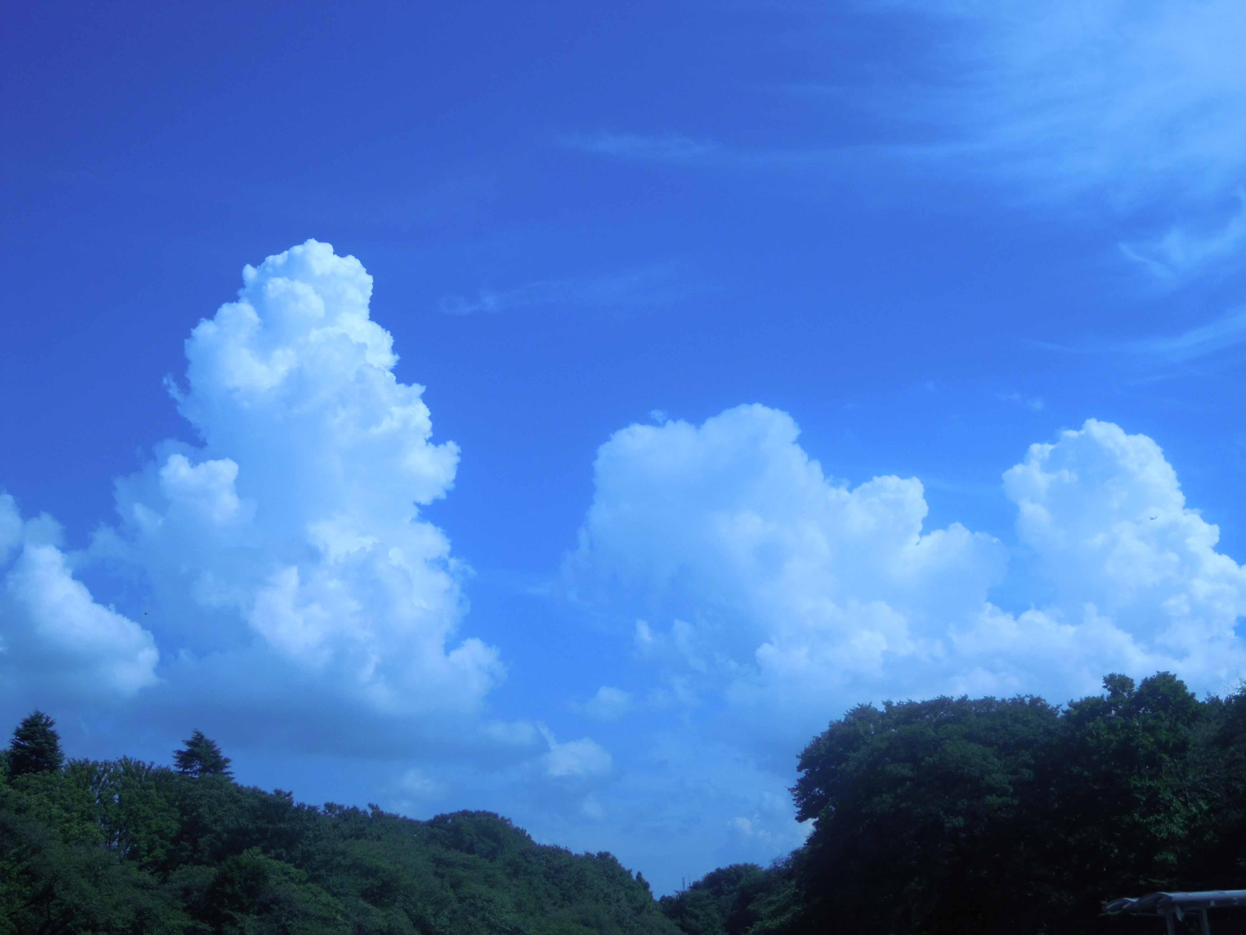 井の頭公園とシカモドキ_e0256436_2575342.jpg