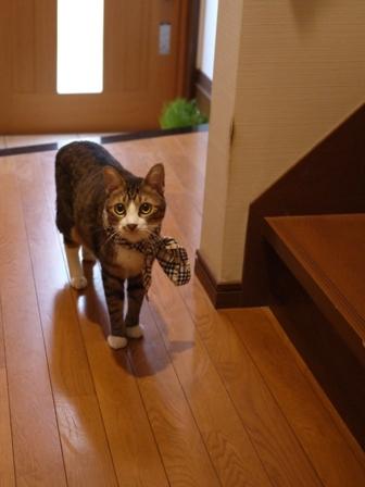 猫のお友だち じょあんちゃんはんくすちゃんあーるくん編。_a0143140_2316260.jpg