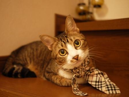 猫のお友だち じょあんちゃんはんくすちゃんあーるくん編。_a0143140_23175913.jpg