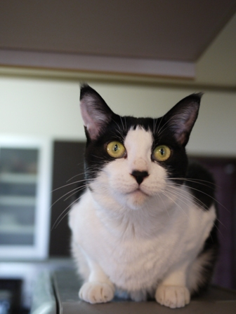 猫のお友だち じょあんちゃんはんくすちゃんあーるくん編。_a0143140_23193110.jpg
