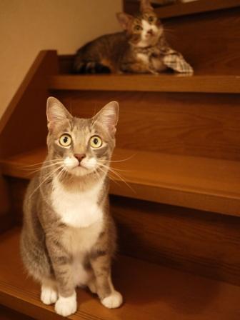 猫のお友だち じょあんちゃんはんくすちゃんあーるくん編。_a0143140_23252120.jpg