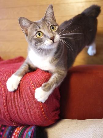 猫のお友だち じょあんちゃんはんくすちゃんあーるくん編。_a0143140_23285723.jpg