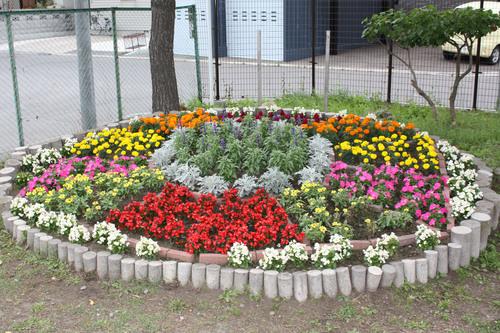 第20回学校花壇コンクール 写真展_e0145841_15295396.jpg