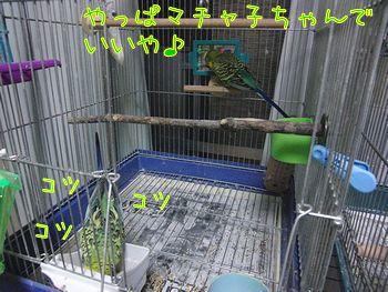 f0196665_833961.jpg