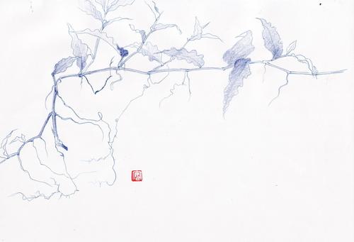 縮み笹を描く_d0101846_720097.jpg