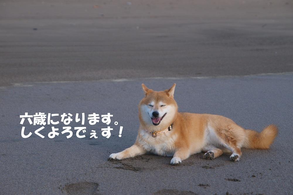 f0109601_1536440.jpg