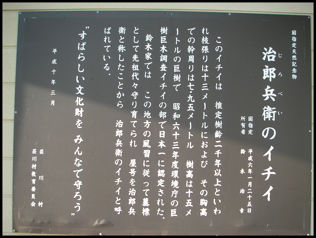 日本一のイチイ_f0053342_21364198.jpg