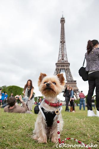 パリ旅行の記念に家族写真 まめちゃん一家編_c0024345_22454165.jpg