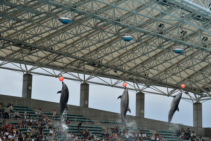 名古屋港水族館_e0170058_1849139.jpg