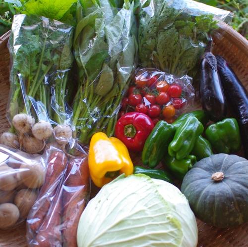 今週の野菜セット(9/18~9/22着)_c0110869_20175552.jpg