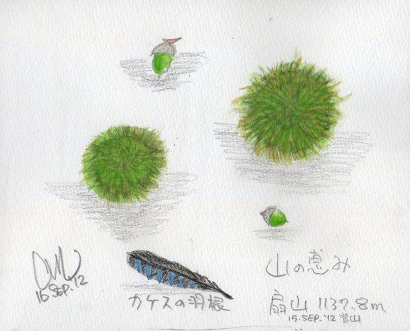 山の恵み_e0232277_10421123.jpg