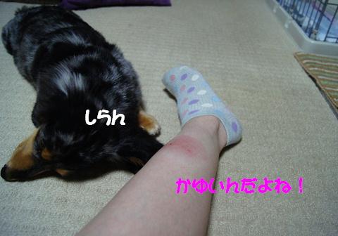 f0195891_15503474.jpg